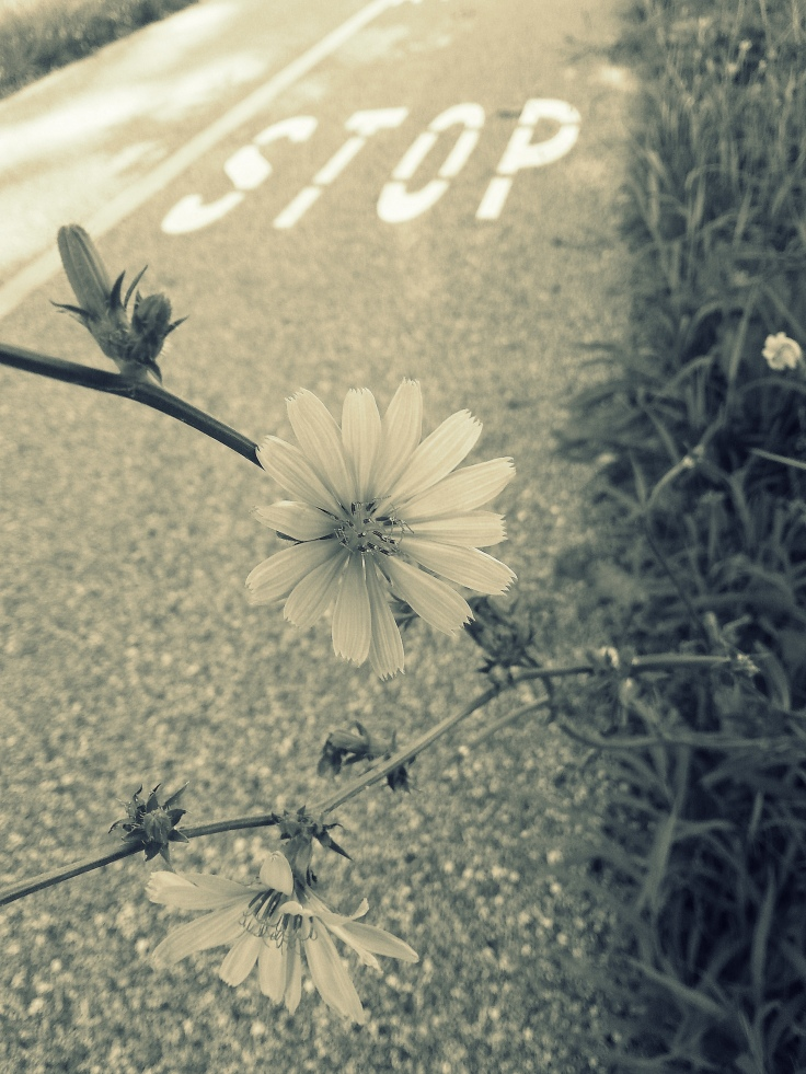 StopflowertrailBW