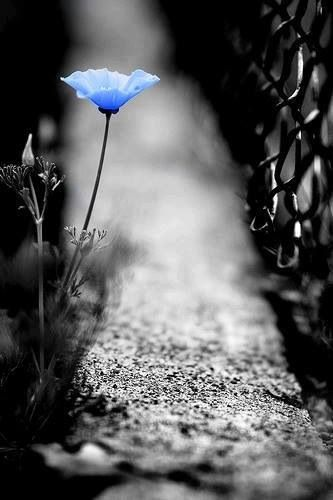 blue flower in asphalt