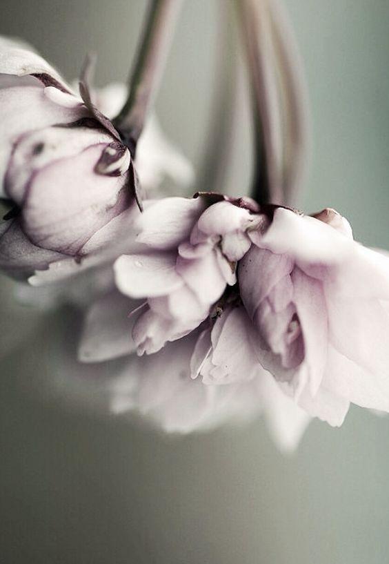 surrendering flowers