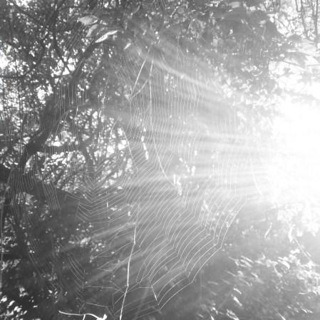 sunbeams in a tree